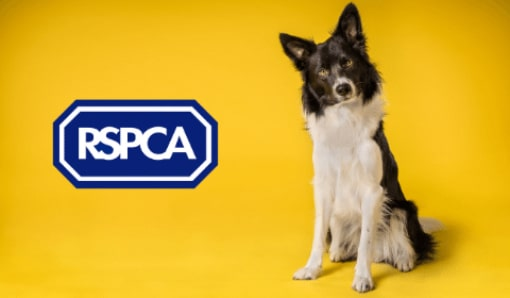 Becoming a Lobbyist for the RSPCA